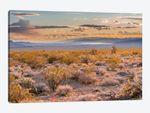 Desert, Lake Mead, Gold Butte National Monument, Nevada