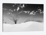 White Sands Minimalistic | Monochrome