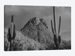 Saguaro Catcit and the Tucson Mountains, Arizona