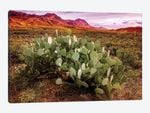 Chisos Mountains with Prickly Pear Cactus I