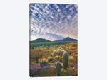 Saguaro And Teddybear Cholla, Arizona Amid Flowering Lupine And California Brittlebush II