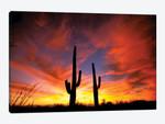 A Pair Of Saguaro Cacti At Sunset, Sonoran Desert, Arizona, USA