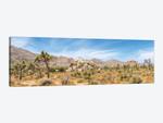 Scenic Panorama - Joshua Tree National Park