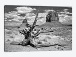 B&W Desert View V