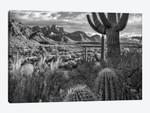 Barrel and Saguaro cacti with the Santa Catalina Mountains, Catalina State Park, Arizona