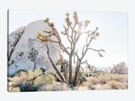 Desert Landscape II, Joshua Tree, California
