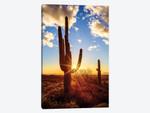 Sunset Saguaro National Park East V