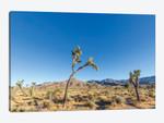 Scenic Joshua Tree National Park