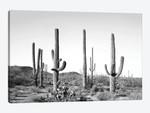 Gray Cactus Land