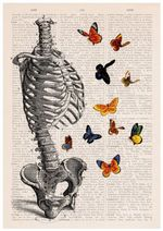 Human Skeleton Torso Full Of Butterflies Home Decor Dictionary Wall Art Work Gift