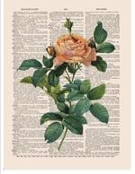 Rose Colorfu Plant Flower Printed Dictionary Furnishing Home Decor Art Work Gift