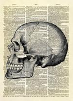 Human Skull Profile Dictionary Art Print Home Decor Art Work Illustration Anatomy Science Gift Print
