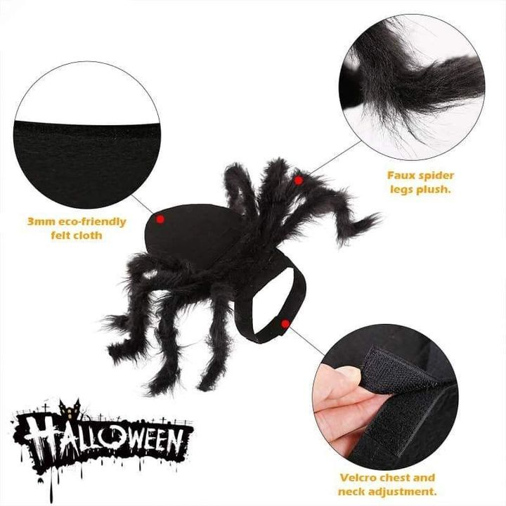 Spider Pet Halloween Costume 🎃 Early Halloween Promotion 🕷️