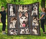 Husky Dog 02 Quilt Blanket Twin