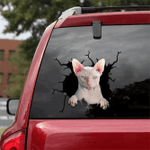 Sphynx Cat Crack Car Sticker