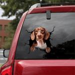 Dachshund Crack Car Sticker 03