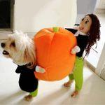 🎃EARLY-HALLOWEEN HOT SALE🎃 Pet Dog Pumpkin Halloween Costume