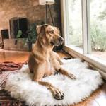 Pup Furbed - Orthopedic Dog Bed With Vegan Fur Memory Foam