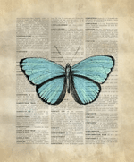 Vintage Dictionary Art Blue Butterfly Colored Insect Animal Wild Life Creature Home Decor Gift