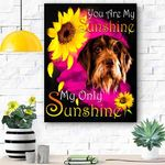 German Wirehaired Pointer My Sunshine Canvas Print Wall Art - Matte Canvas