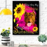 American Pit Bull Terrier Face My Sunshine Canvas Print Wall Art - Matte Canvas