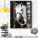White Horse Canvas Print Wall Art - Matte Canvas