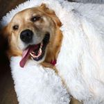 Weighted Pet Blanket
