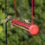 ✅ Bob's Best Hummingbird Feeder