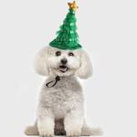 Santa Dog Hat Santa Beard Hat For Dogs Cats Custom Cat Hat