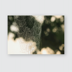 Fine Art Spider Webs Poster, Sticker, Ornament