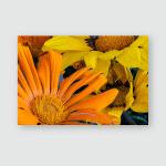 Fine Art Still Life Color Flower Poster, Sticker, Ornament
