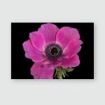 Fine Art Still Life Floral Color Poster, Sticker, Ornament