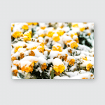 First Snow City Flowers Blooming Covered Poster, Sticker, Ornament