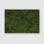 English Summer Bushy Leaves Textures Poster, Pillow Case, Tumbler, Sticker, Ornament