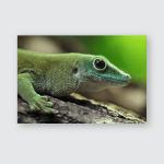 Kochs Giant Day Gecko Phelsuma Madagascariensis Poster, Pillow Case, Tumbler, Sticker, Ornament