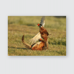 Pheasant Males Fighting During Mating Season Poster, Pillow Case, Tumbler, Sticker, Ornament