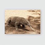 Komodo Protected Animal Indonesia This Rare Poster, Pillow Case, Tumbler, Sticker, Ornament