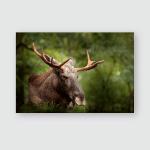 Eurasian Elk Alces Dark Forest During Poster, Pillow Case, Tumbler, Sticker, Ornament