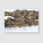 Eurasian Otter On Norwegian Coast Poster, Pillow Case, Tumbler, Sticker, Ornament