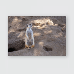 Suricata Standing On Guard Curious Meerkat Poster, Pillow Case, Tumbler, Sticker, Ornament