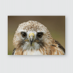 Photo Alert Looking Saker Falcon Poster, Pillow Case, Tumbler, Sticker, Ornament
