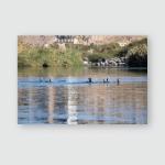 Swimming Birds River Nile Poster, Pillow Case, Tumbler, Sticker, Ornament