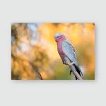 Eurasian Jay Sitting On Old Oak Poster, Pillow Case, Tumbler, Sticker, Ornament