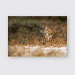 Eurasian Eagleowl Bubo Winter Scenery Poster, Pillow Case, Tumbler, Sticker, Ornament