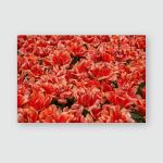 Exotic Spring Flowers Grow Netherlands Dutch Poster, Pillow Case, Tumbler, Sticker, Ornament