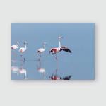 Pink Flamingos Lake Nakuru Their Natural Poster, Pillow Case, Tumbler, Sticker, Ornament