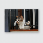 Adopt Dont Shop Cat Sitting On Poster, Pillow Case, Tumbler, Sticker, Ornament