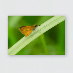 Least Skipper Butterfly Resting On Blade Poster, Pillow Case, Tumbler, Sticker, Ornament
