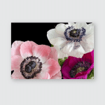 Pink Gerbera Flowers Close Surrounded By Poster, Pillow Case, Tumbler, Sticker, Ornament