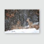 Female Roe Deer Capreolus Doe Standing Poster, Pillow Case, Tumbler, Sticker, Ornament